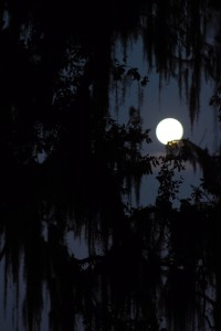 Full Moon on Christmas night through the trees. 122615 003 (2)