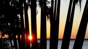 sunset-through-palm-leaves-091516-2